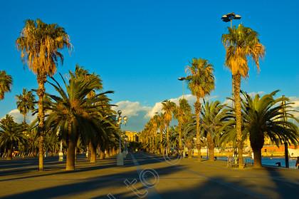 28759   Moll de la Fusta Barcelona Spain EU   Keywords: moll de la fusta, waterfront, seaside, palm tree, barcelona, wharf, catalonia, catalunya, cataluna, spain, spanish, europe, european, union, eu, city, downtown, city centre, central, espana, nobody